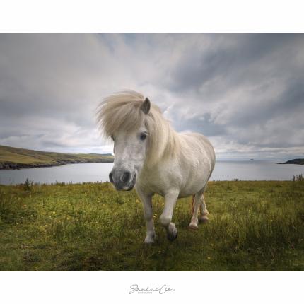 Shetland Resident