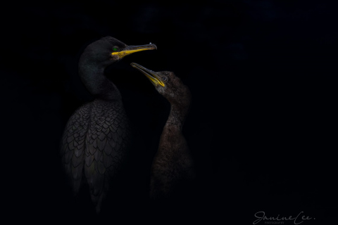 Wildlife/Nature